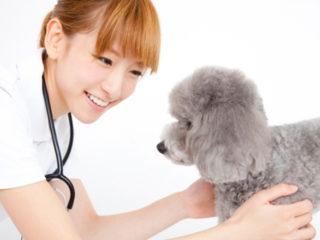 獣医の仕事